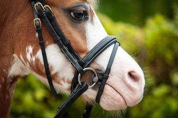 Pony trens