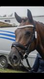 Shine Neusriem Zwart Bridle & Ride MET sperriem_