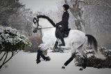 Equibridle Snow Grey Trens _
