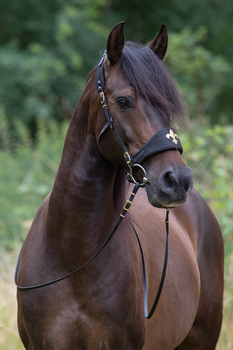 Equibridle Emilia Stang & Trens Zwart
