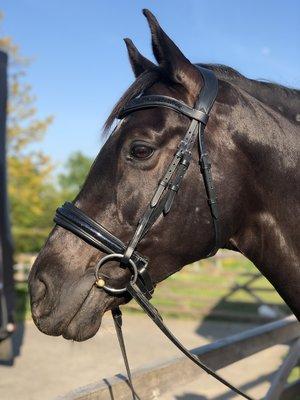 Shine trens hoofdstel Zwart Bridle & Ride zonder sperriem