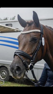 Shine Neusriem Zwart Bridle & Ride MET sperriem