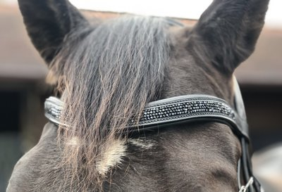Shine Frontriem Zwart Bridle & Ride