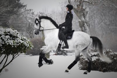 Equibridle Snow Grey Trens