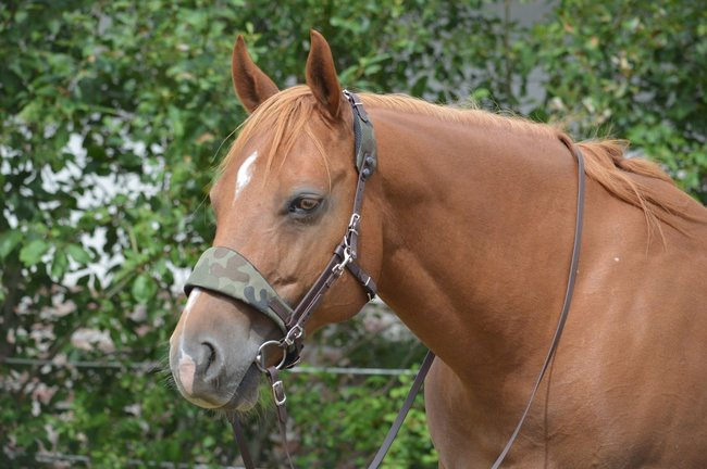 Equibridle Camouflage Trens