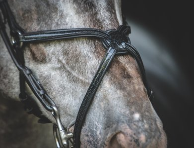 Shine Mexican neusriem Zwart Bridle & Ride